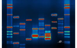 MIT's George Church Says Sell Your DNA