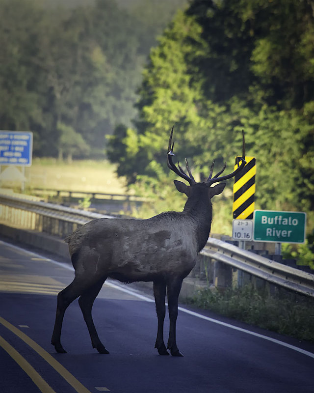 Teen-created Elk Silhouettes in Digital Fabrication Lab to Warn Motorists